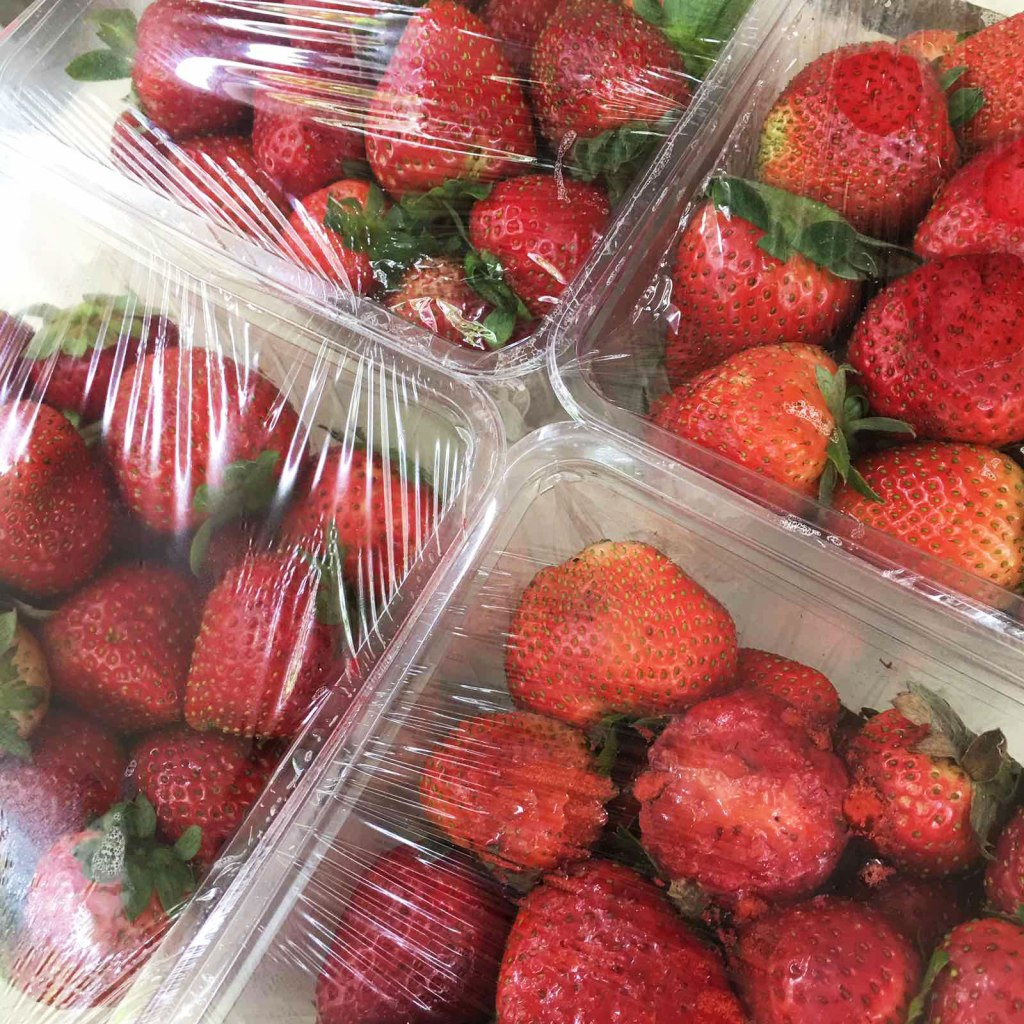 trays of strawberries covered with cling wrap