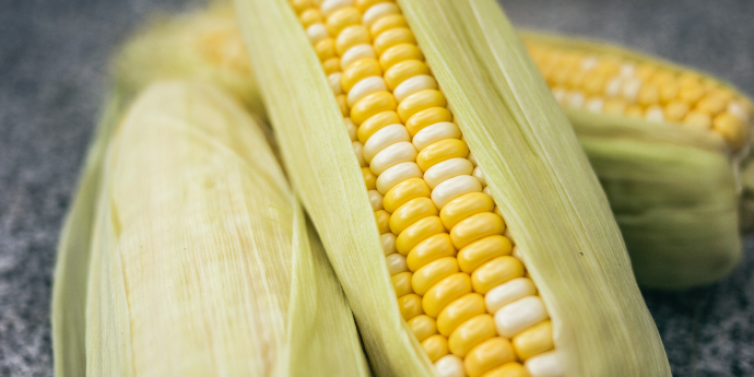 corn in its husk